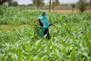 agro Mauritanie