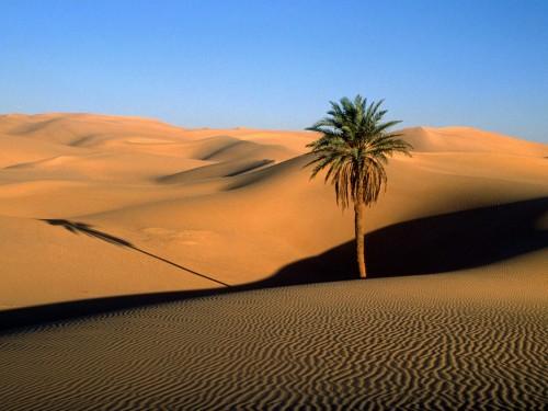 Desert 01 Sahara