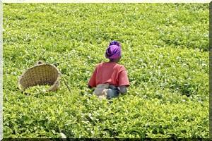 agriculture Afrique 6 455