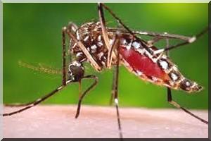 mousti que dengue 210